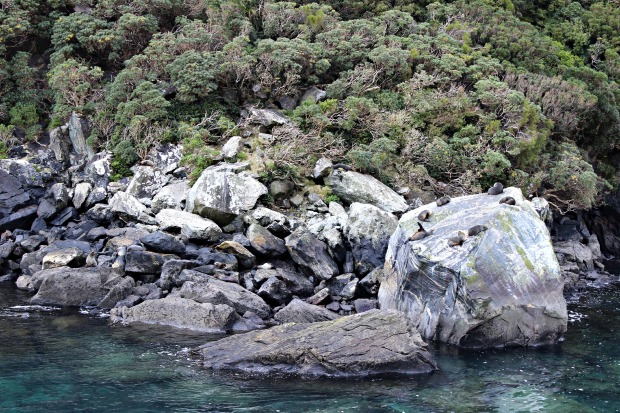milford sound cruise nz travel seals