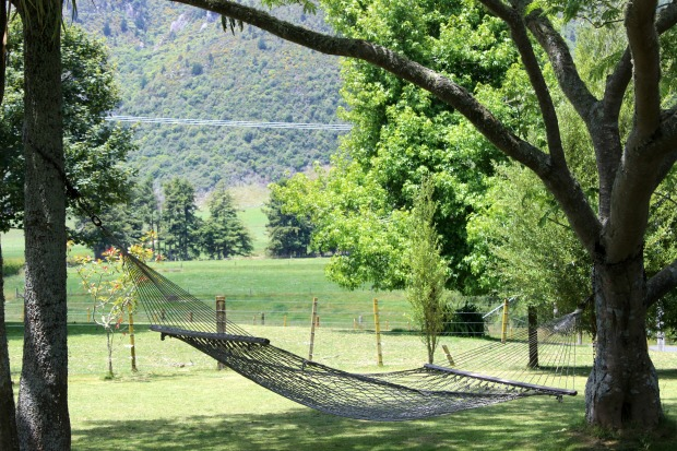 nature new zealand view trees hammock