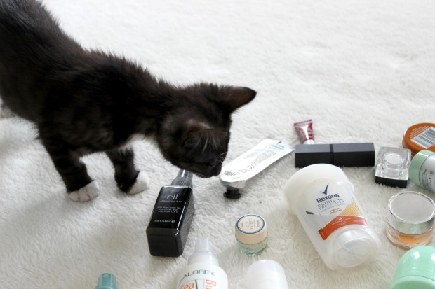 cat kitten beauty empties