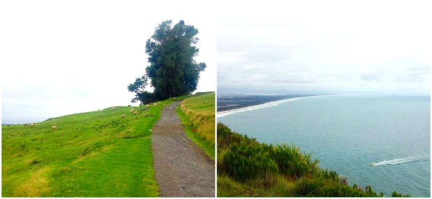 the mount tauranga new zealand view