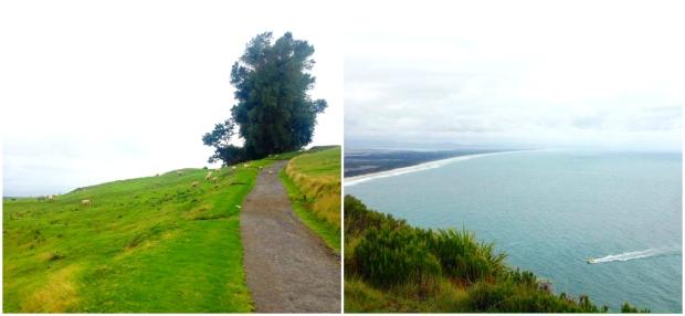 the mount tauranga new zealand view