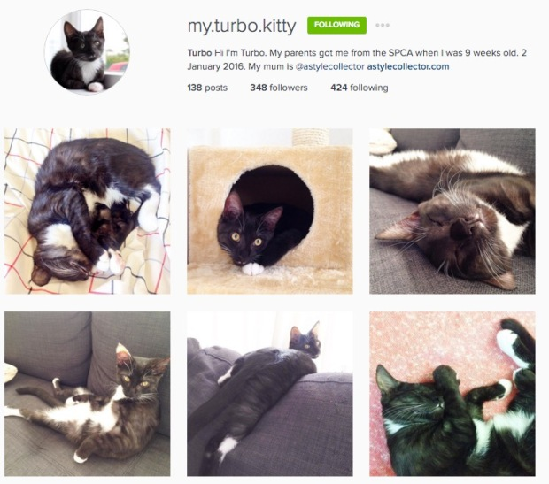 my.turbo.kitty cat kitten instagram Turbo
