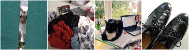 june highlights cat thrifting