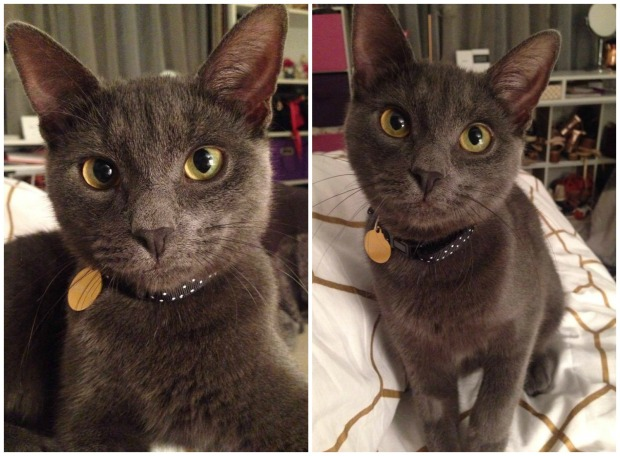 Mouse the grey kitty.jpg