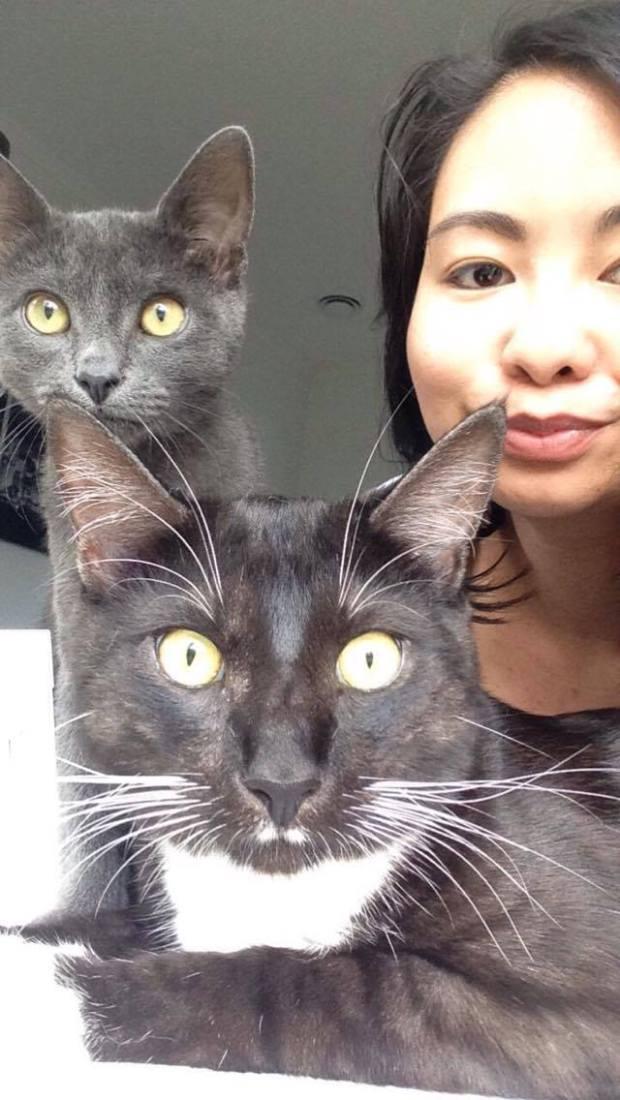 My cats.jpg