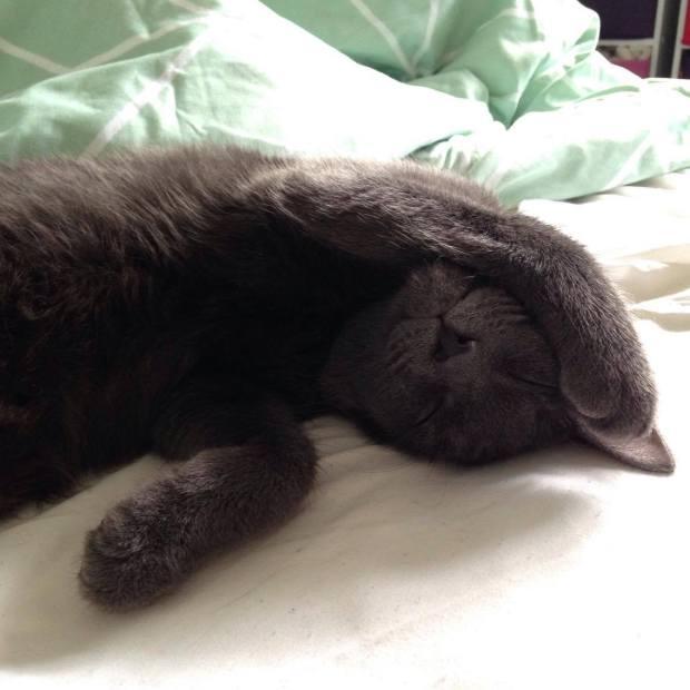 sleepy cat.jpg