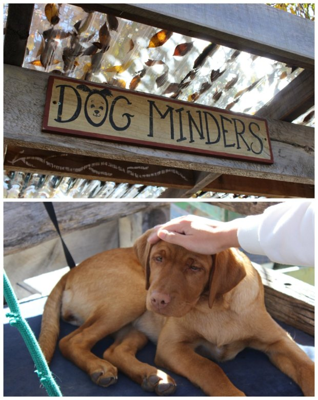 Matakana Dog Minders.jpg