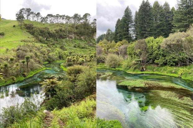 Putaruru Blue Spring